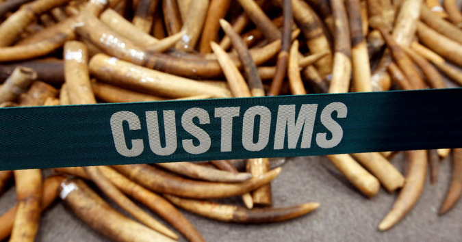 Customs sign across photo with seized ivory in background
