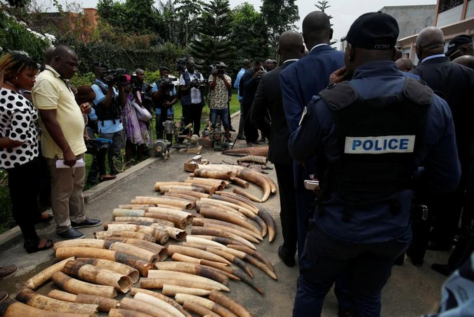 Elephant tusks seized from traffickers