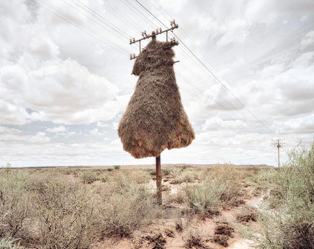Sociable Weavers
