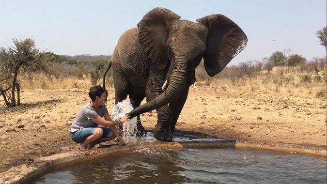 Elephant and person by waterhole