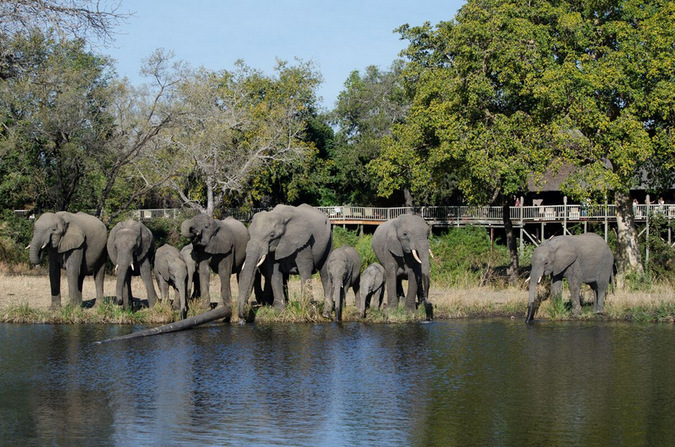 Elephant herd at waterhole in Sabi Sabi Game Reserve