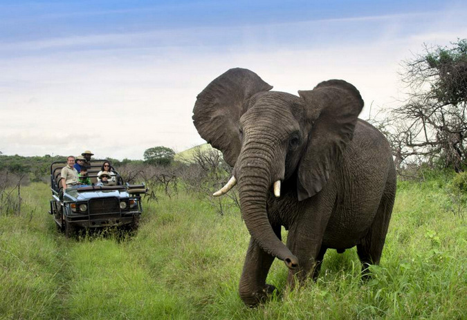 Elephant and safari guests in Phinda Private Nature Reserve
