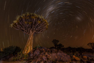 Startrail with quiver tree at Quiver Tree Forest, Keetmanshoop, southern Namibia © Henning de Beer