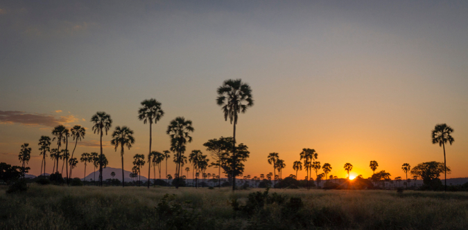 Sunset with palm trees in Ruaha National Park, Tanzania