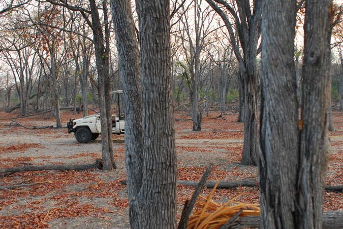 Mopane woodland in northern Botswana