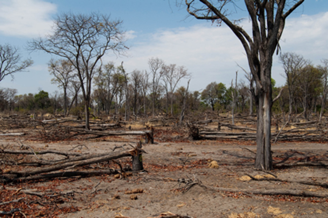 Destroyed mopane woodland in Botswana