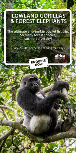 AG Lowland Gorilla Trekking