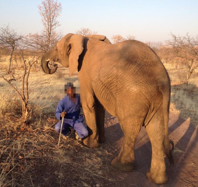 Elephant and handler in Victoria Falls, Zimbabwe