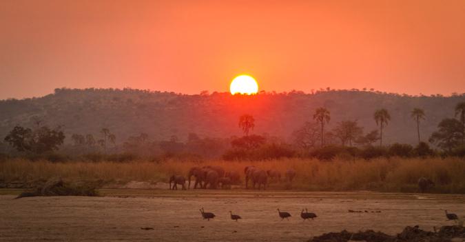 Sunset with elephants in Ruaha National Park, Tanzania