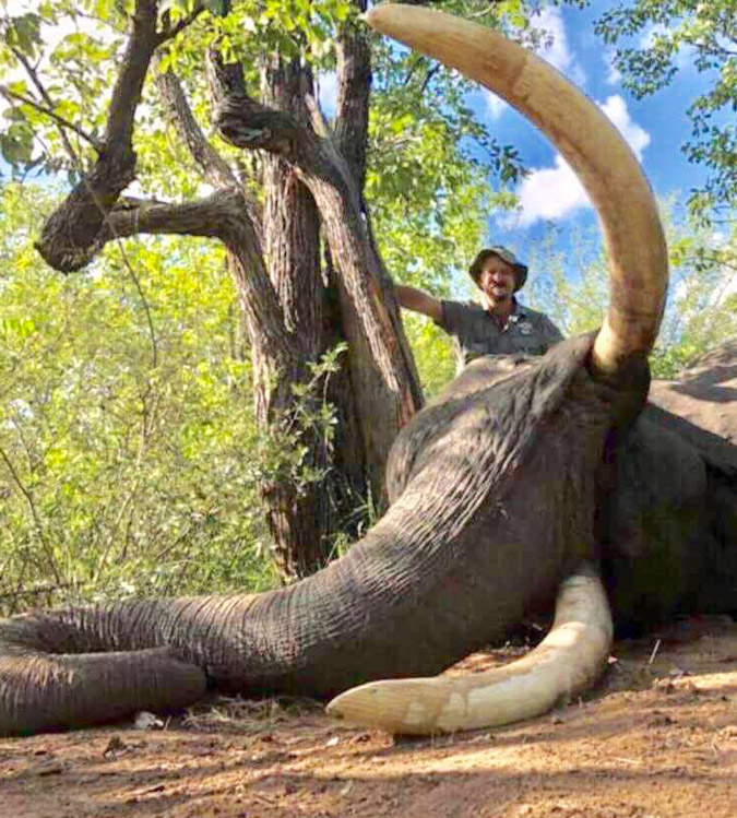 Gonarezhou elephant killed by hunter