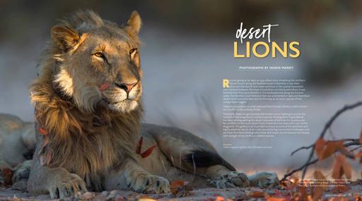 Desert-Lions