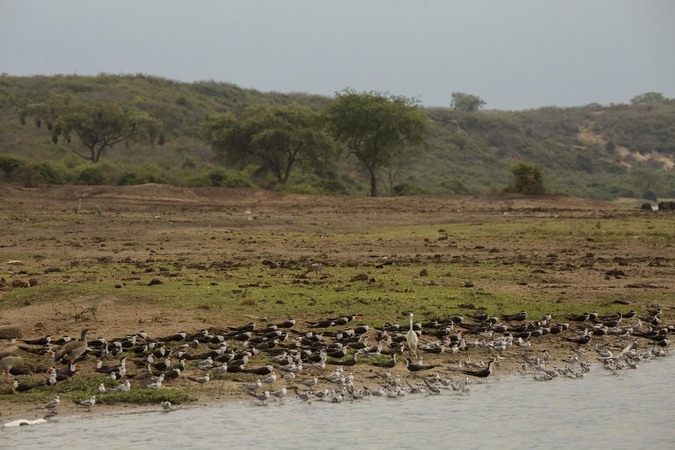 Array of bird life on Kazinga channel in Queen Elizabeth NP in Uganda