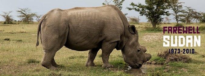 Sudan, last male northern white rhino, died March 2018