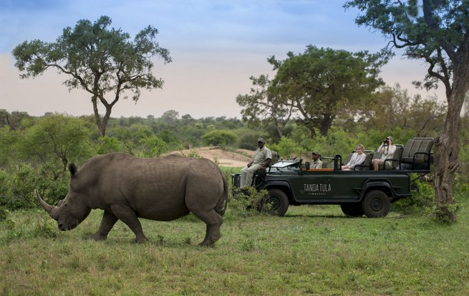 Rhino with game viewing vehicle in Tanda Tula in Greater Kruger