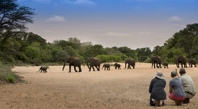 Guest watching elephants cross dry riverbed in Tanda Tula in Greater Kruger
