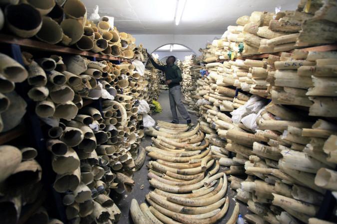 Ivory in Zimbabwe