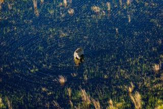 'Circles…' – a zebra grazes in the Okavango Delta, Botswana © Christoph Keidel