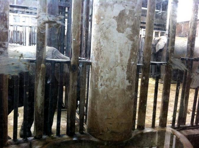 Elephants in Beijing Zoo in China
