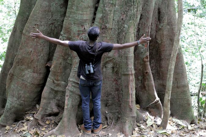 Large tree in Ngangao Forest in Taita Hills, Kenya