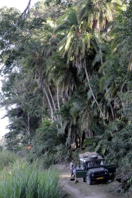 Ngangao Forest in Taita Hills, Kenya