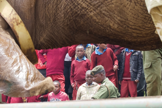 School children watch relocation of tranquillised elephant in northern Kenya