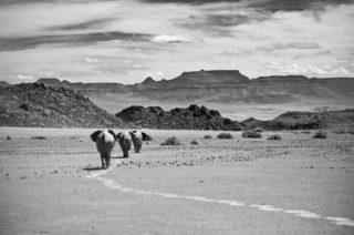 Desert elephants in the Huab River Valley, Damaraland, Namibia © Norman Victor (Instagram/norm_northmen)
