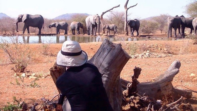 Guest in Madikwe watching elephants at a waterhole