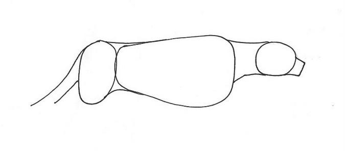 Basic line drawing of a cheetah