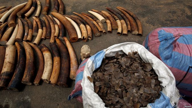 Bags of pangolin scales and elephant tusks seized from traffickers