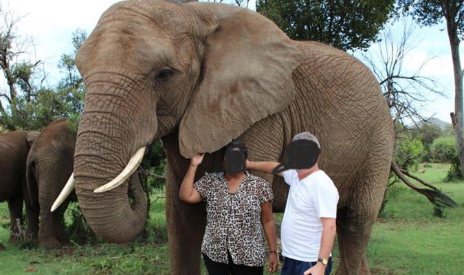 Elephant encounters at Glen Afric