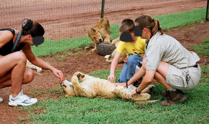 Lion cub petting at Glen Afric