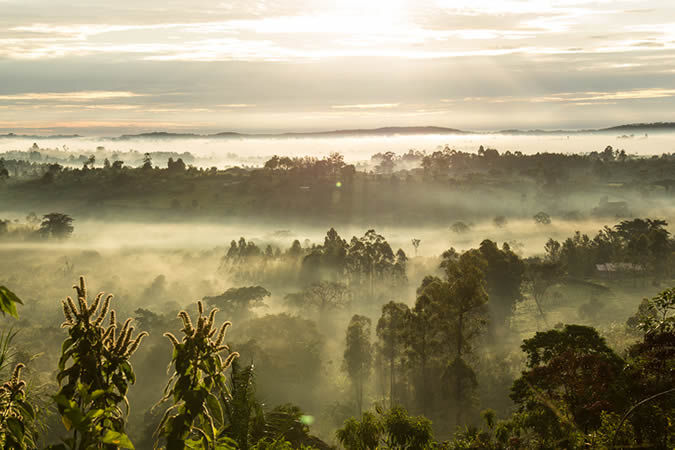 Kibale National Park at sunrise, Uganda
