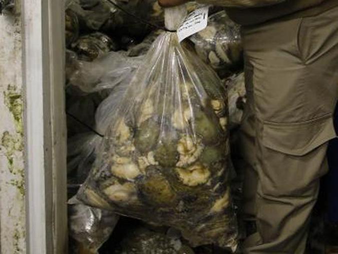 bag of seized abalone, marine poaching