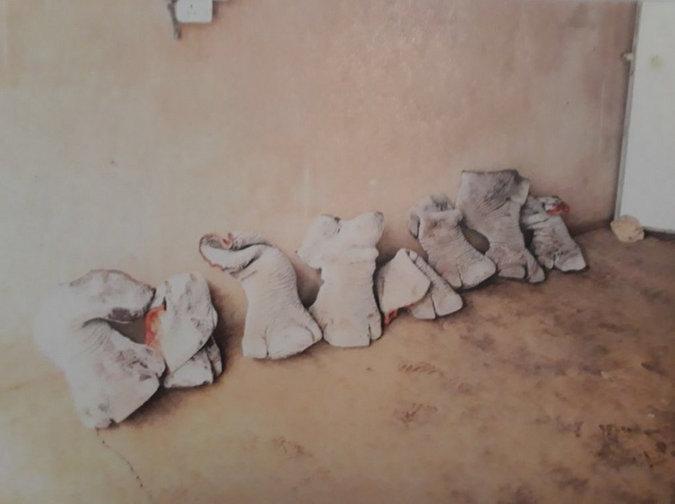 Rhino feet