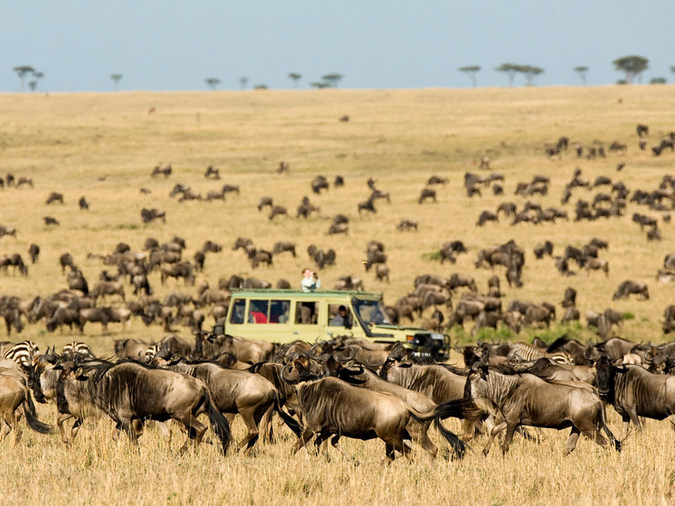 Wildebeest migration, Sayari Camp, Serengeti, Tanzania
