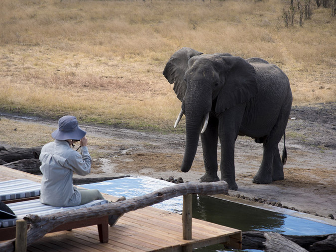Elephant by waterhole at Somalisa Expeditions, Hwange National Park, Zimbabwe