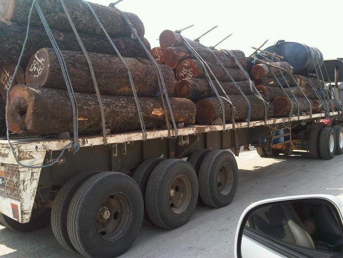 Logging in East Africa