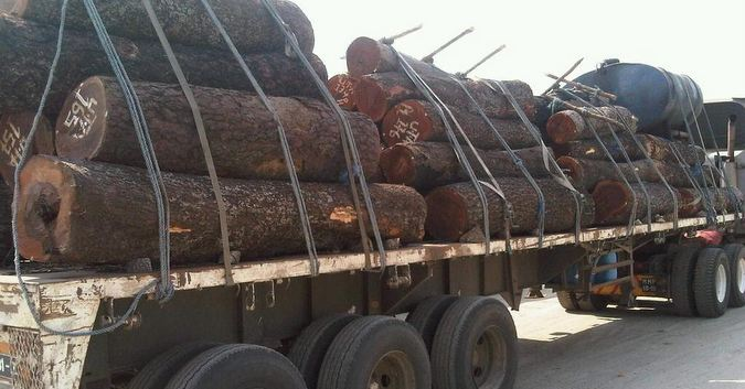logging © Simon Espley