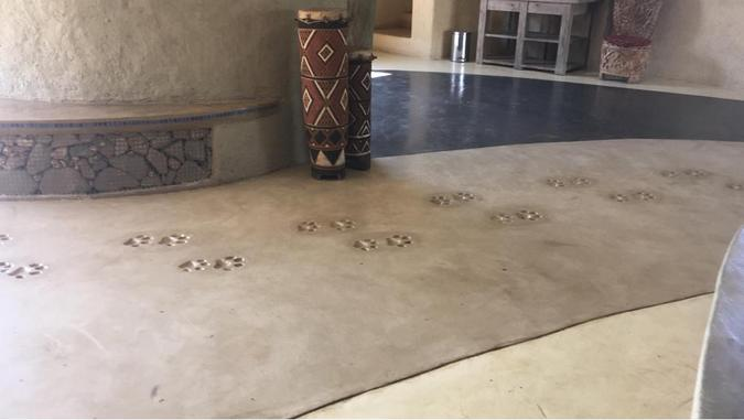 Floor with lion spoor set into the concrete