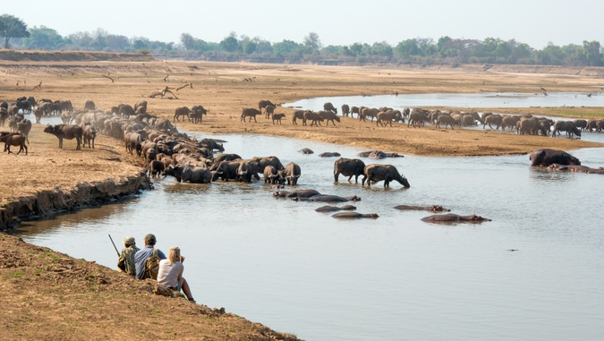 Guests watching buffalos and hippos in Luangwa Valley, Zambia