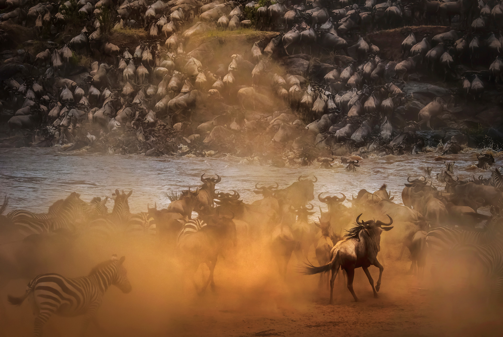 Wildebeest crossing at river