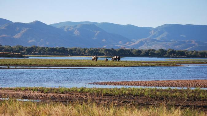 Elephants at Zambezi River in Mana Pools National Park, Zimbabwe