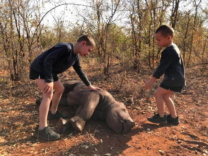 Dead baby rhino, African wildlife poaching