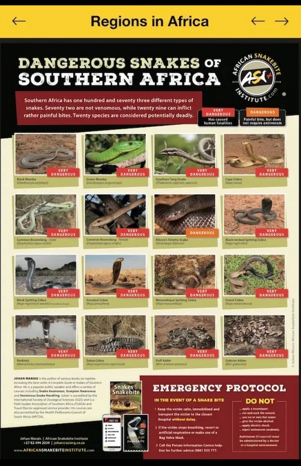 Snakebite app showing dangerous snakes of southern Africa