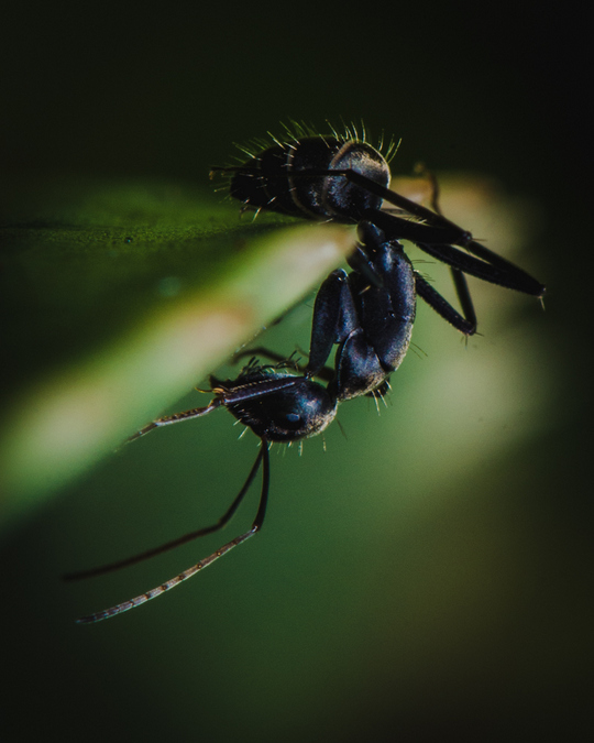 ant close up, macro photography