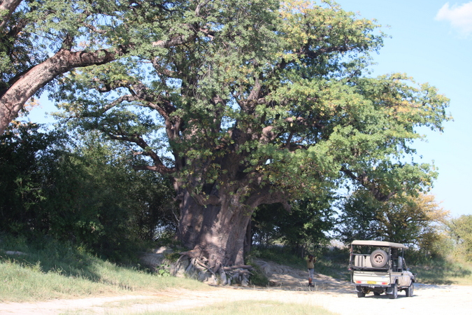 Baines' Baobabs in Botswana with safari vehicle