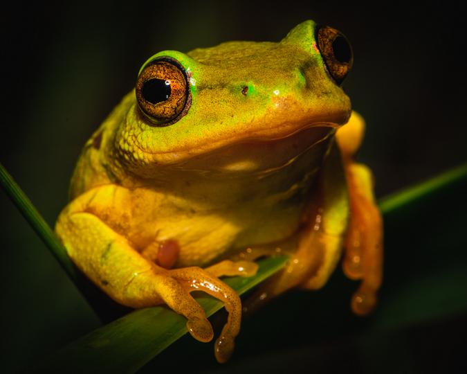 toad up close, macro photography