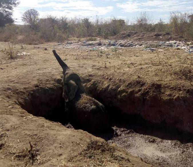Elephant calf stuck in mud pit in Zimbabwe