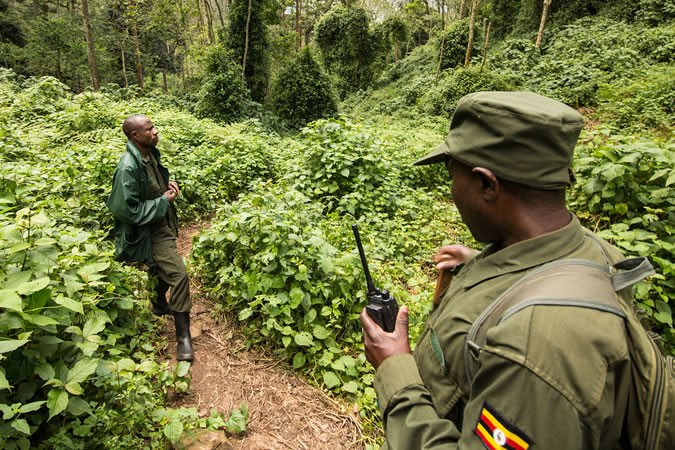 Mountain gorilla trackers in Uganda