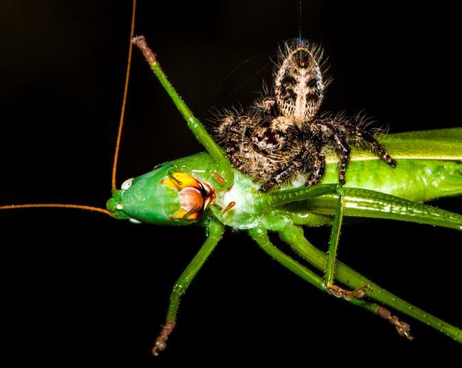 locust and spider, macro photography